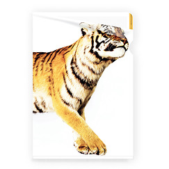 Siberian Tiger Clear file A4