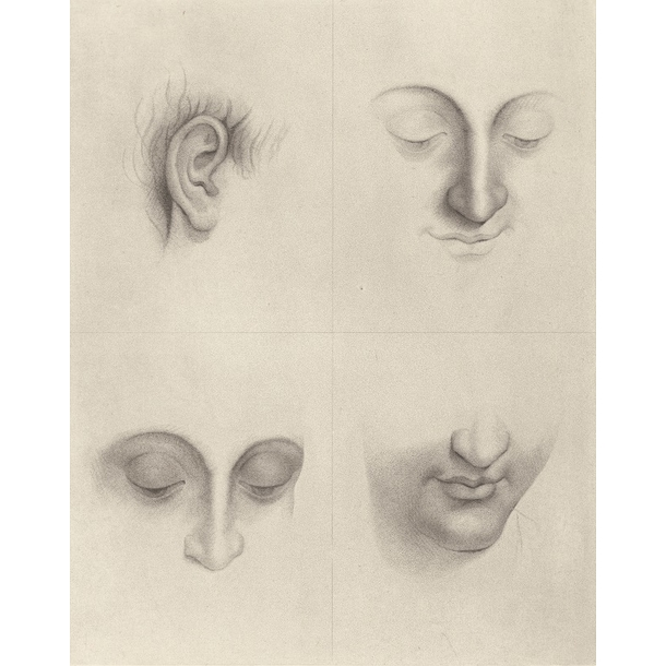 Studies for a woman's head - da Vinci