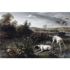 Folle and Mitte, dogs of Louis XIV - François Desportes