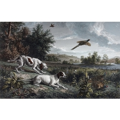 Diane and Blonde, dogs of Louis XIV, hunting pheasant - François Desportes