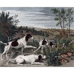 Bonne, Nonne and Ponne, dogs from the pack of Louis XIV - François Desportes