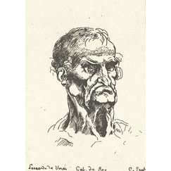 Elderly male head - Leonardo da Vinci