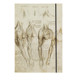 Leonardo da Vinci Elastic folder - Anatomical studies