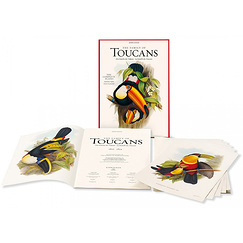 The Family of Toucans (La famille des Toucans)