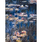 Poster The Waterlilies by Claude Monet