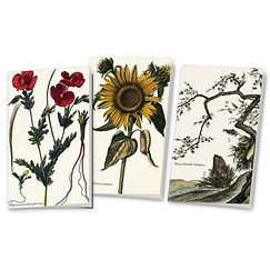 "3 small notebooks ""Louis XIV Herbarium"""