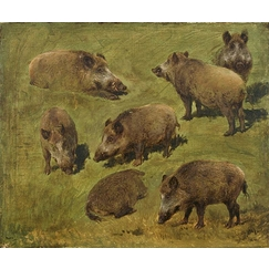 Lying and standing boars: 7 sketches