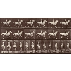 Animal Locomotion: White horse at the step