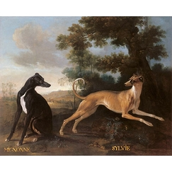 Mignonne and Sylvie, dogs from the pack of Louis XV oudry