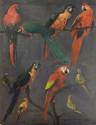 Macaws and parakeets