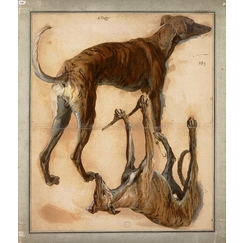 Two inverted studies of greyhounds