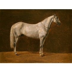"Napoleon's horse: ""The Sahara\"""