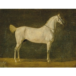 "Napoleon's horse ""The Distinguished One\"""