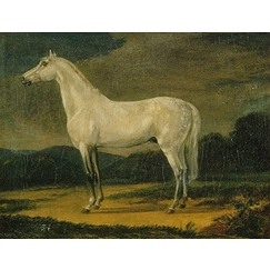 "Napoleon's horse ""the Vizir\"""