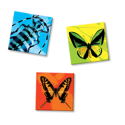 3 Magnets Insectes