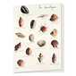 """Shells"" Notebook"