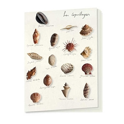 "Cahier ""Coquillages"""